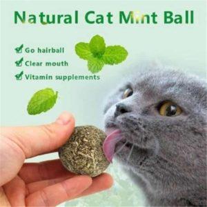 Catnip Ball Safety