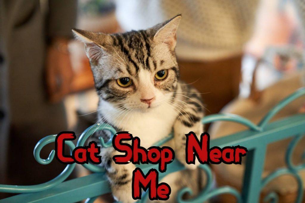 Cat Shop Near Me