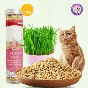 Bioline Cat Grass Seeds 100G