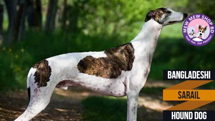 Sarail Hound Dogs